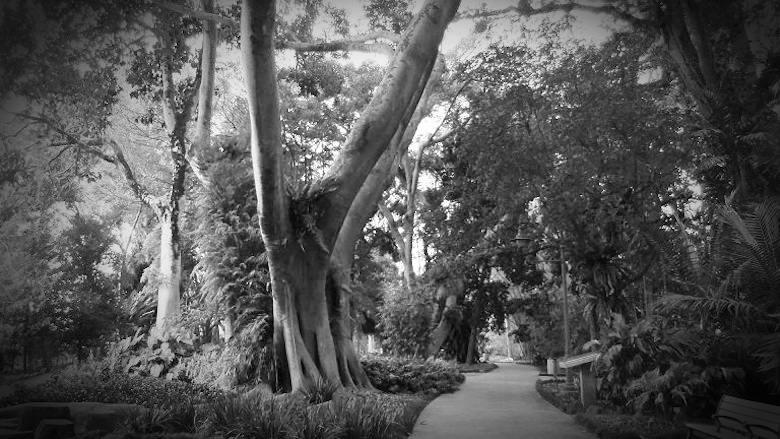 wahiawa-botanical-garden