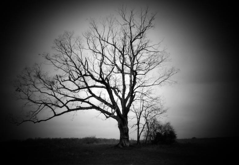 the-devils-tree-bernards-township